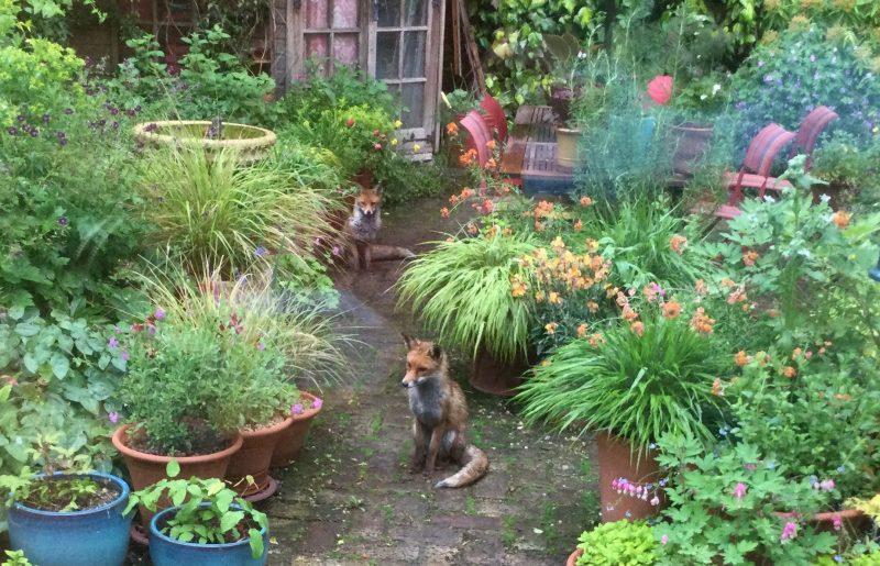 wildlife in a cottage garden