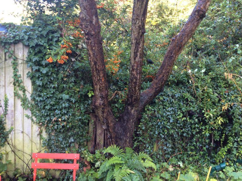 Tree trunk, and spot the blackbird