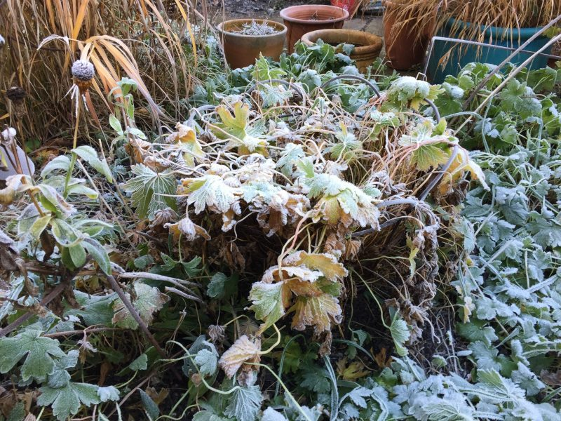 A new year in the cottage garden