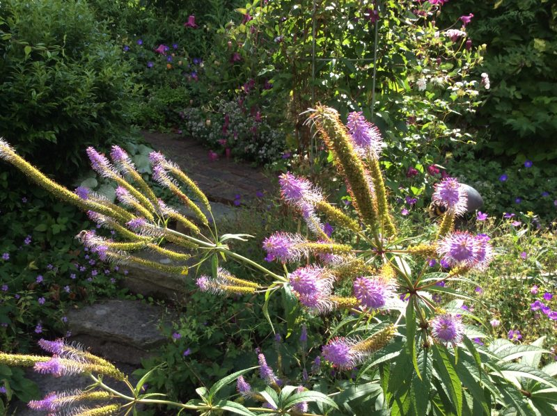 London cottage garden plants