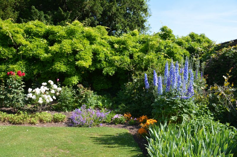 Inspiration for a london cottage garden
