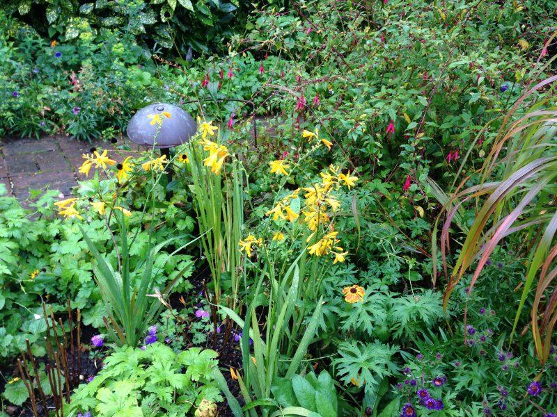 Crocosmia cottage garden plant