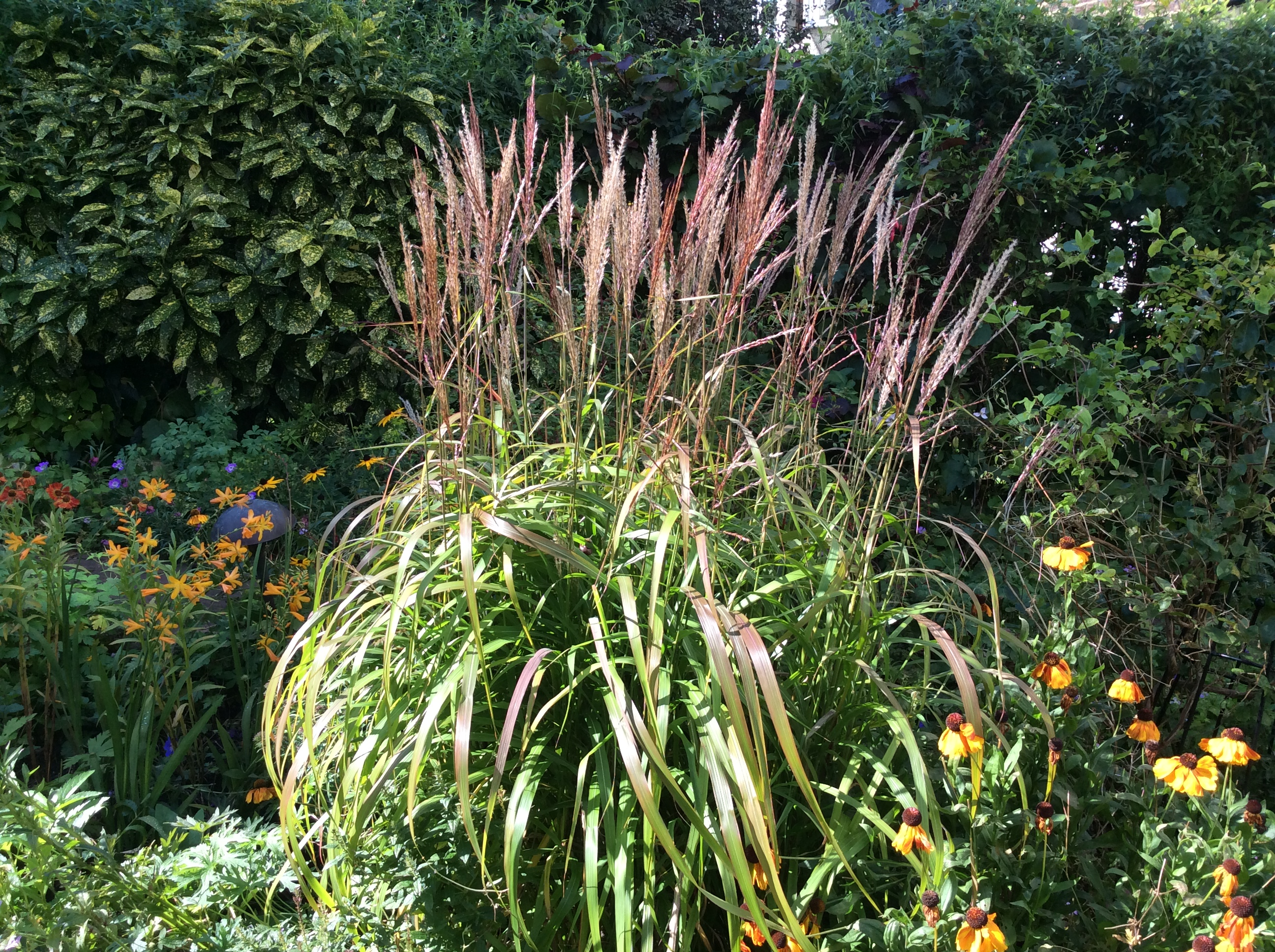 grasses for cottage gardens
