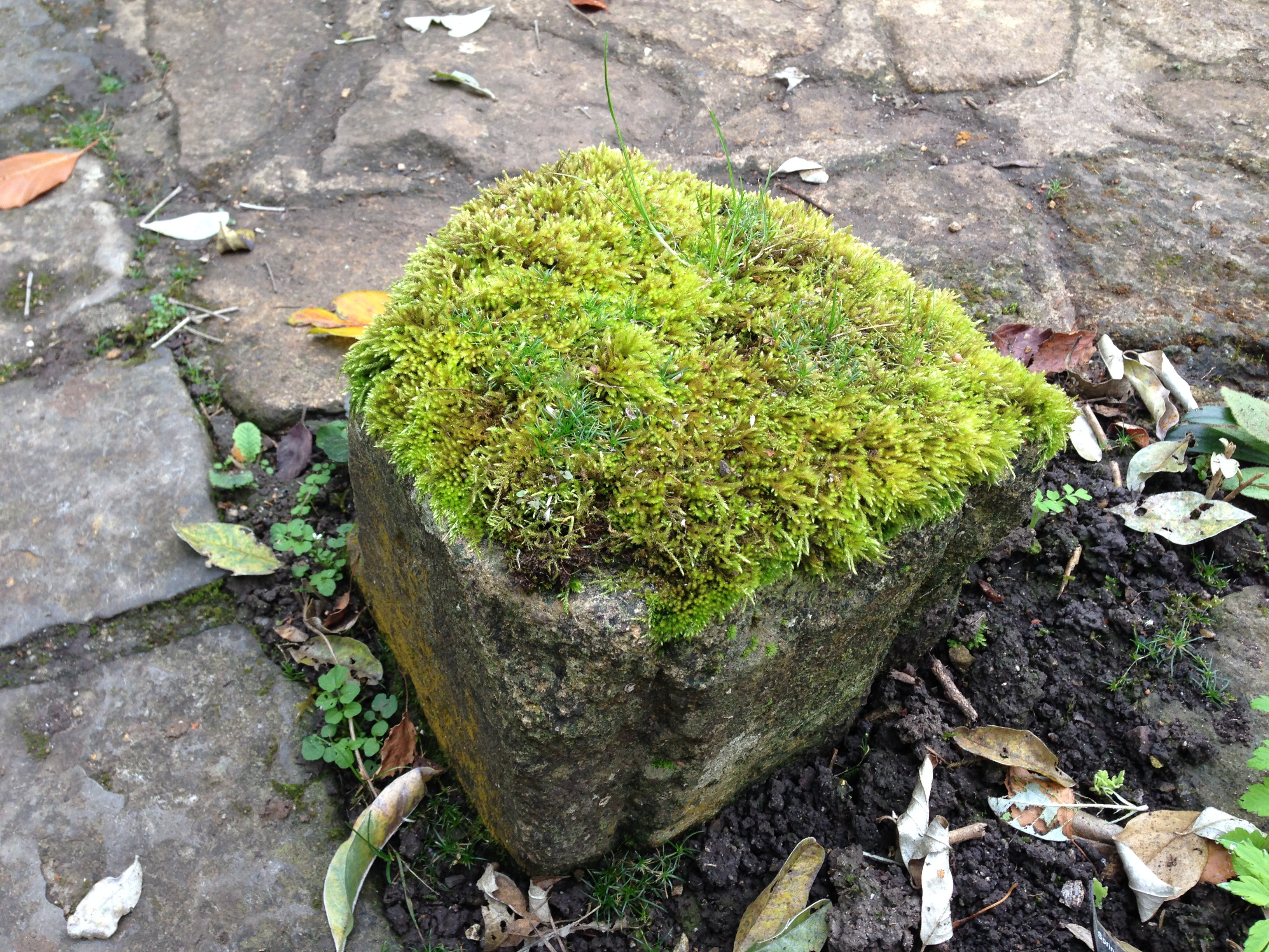 Moss on a stone at East Lambrook Manor Gardens