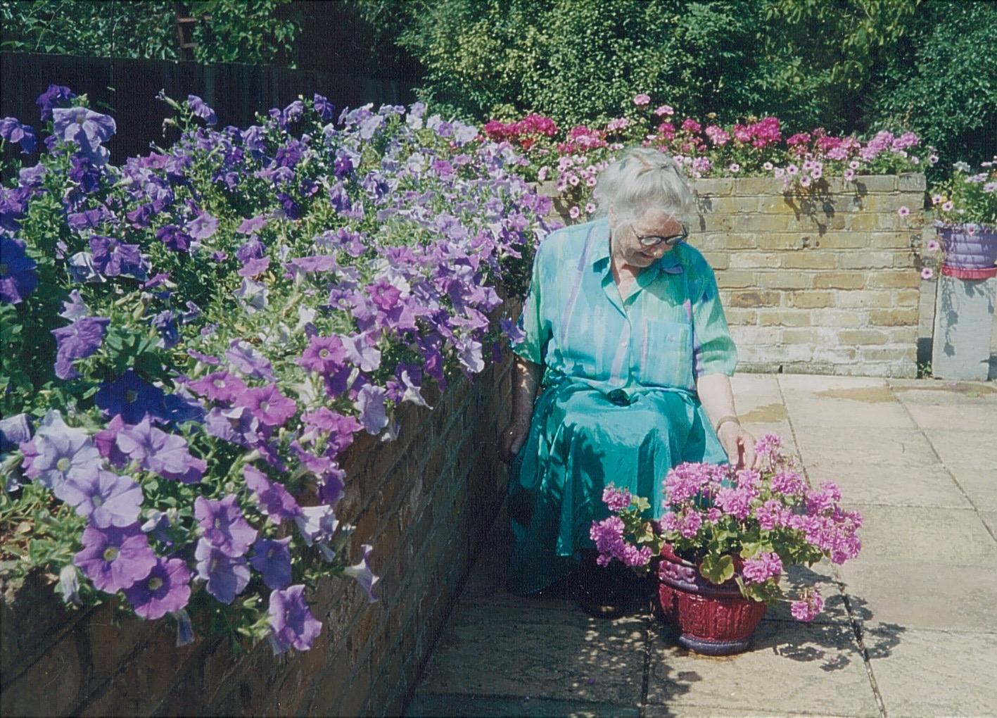 petunias, geraniums, summer, container gardening,