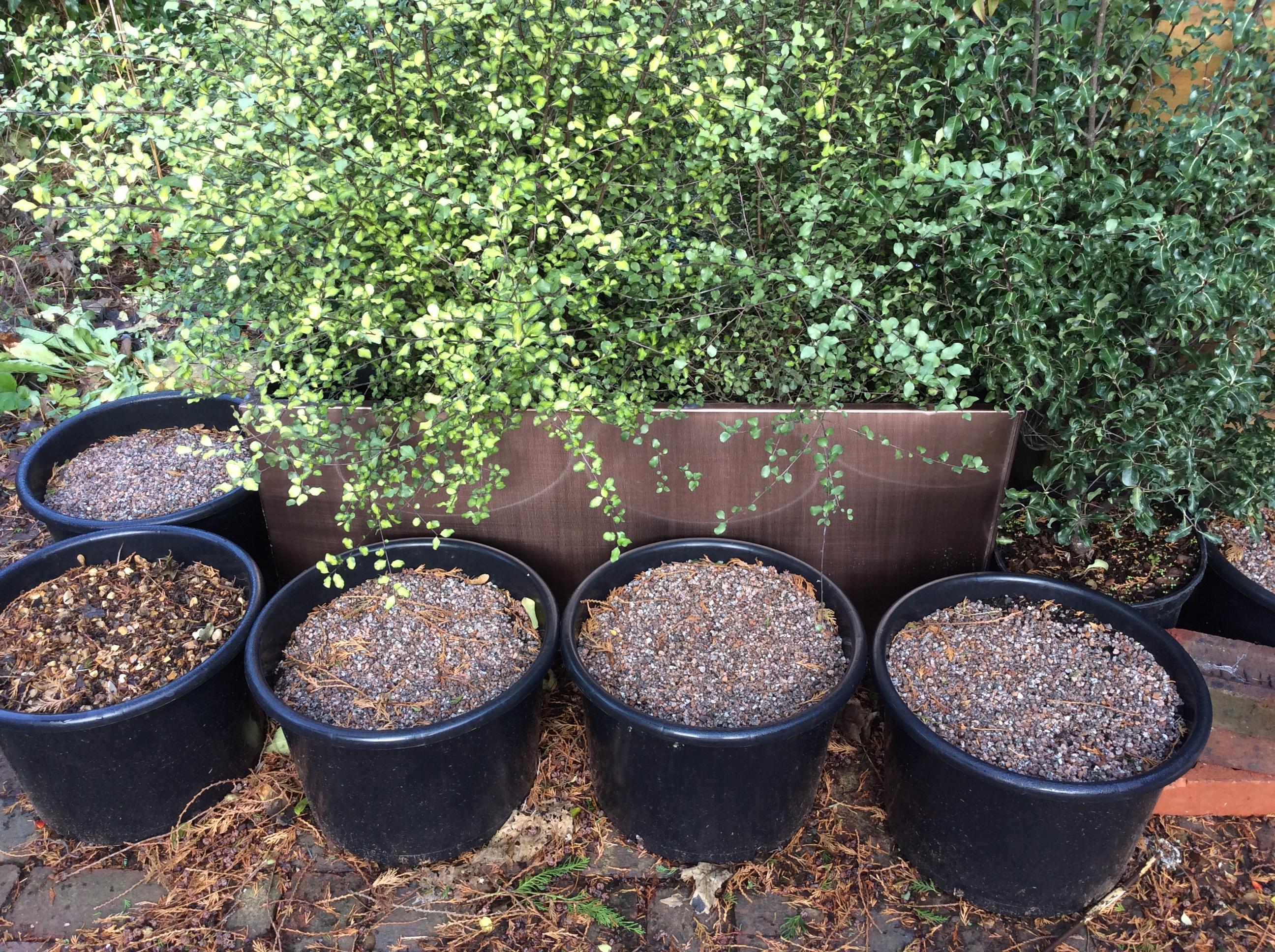 container garden, shrubs