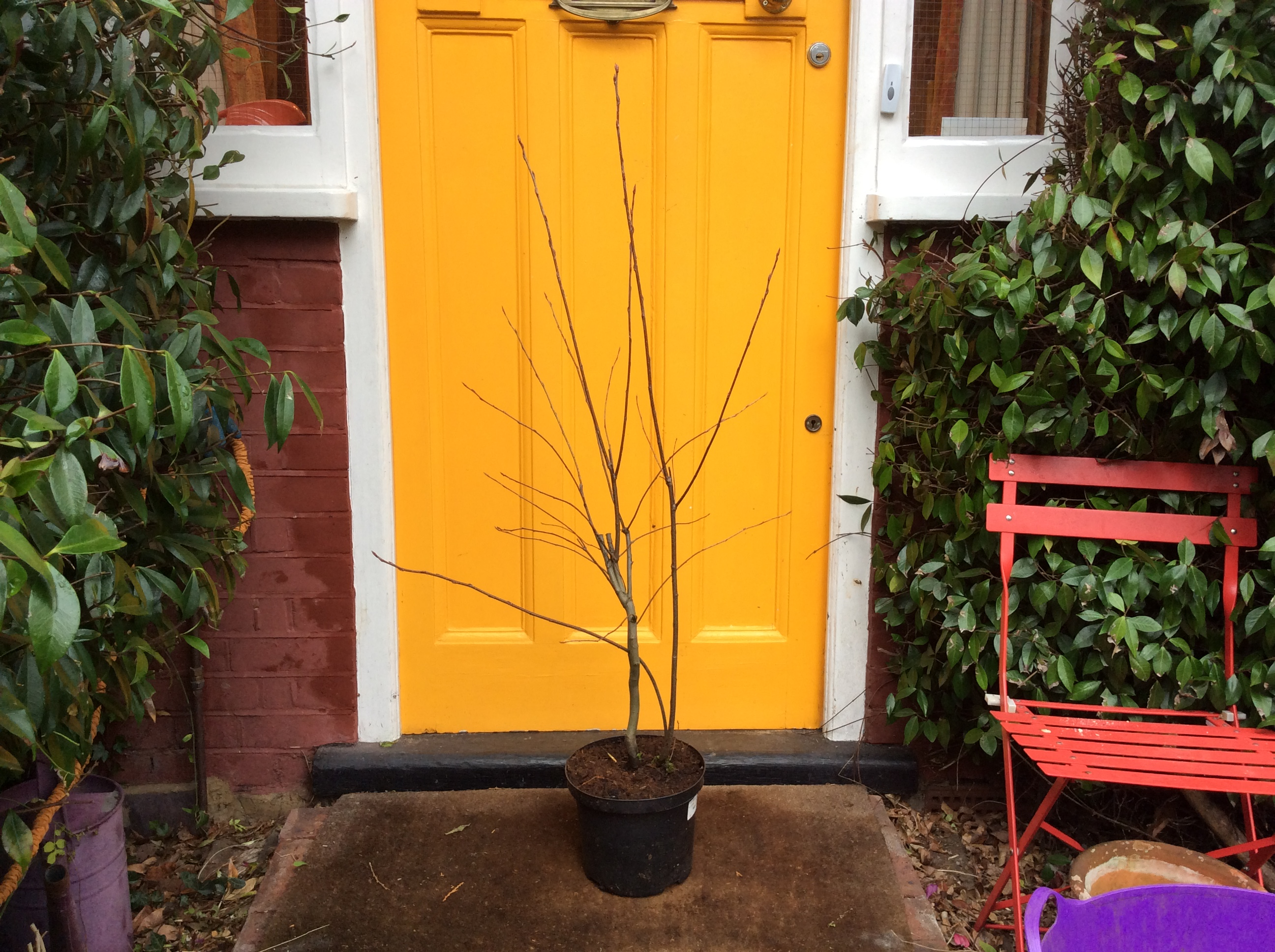 Cottage garden tree