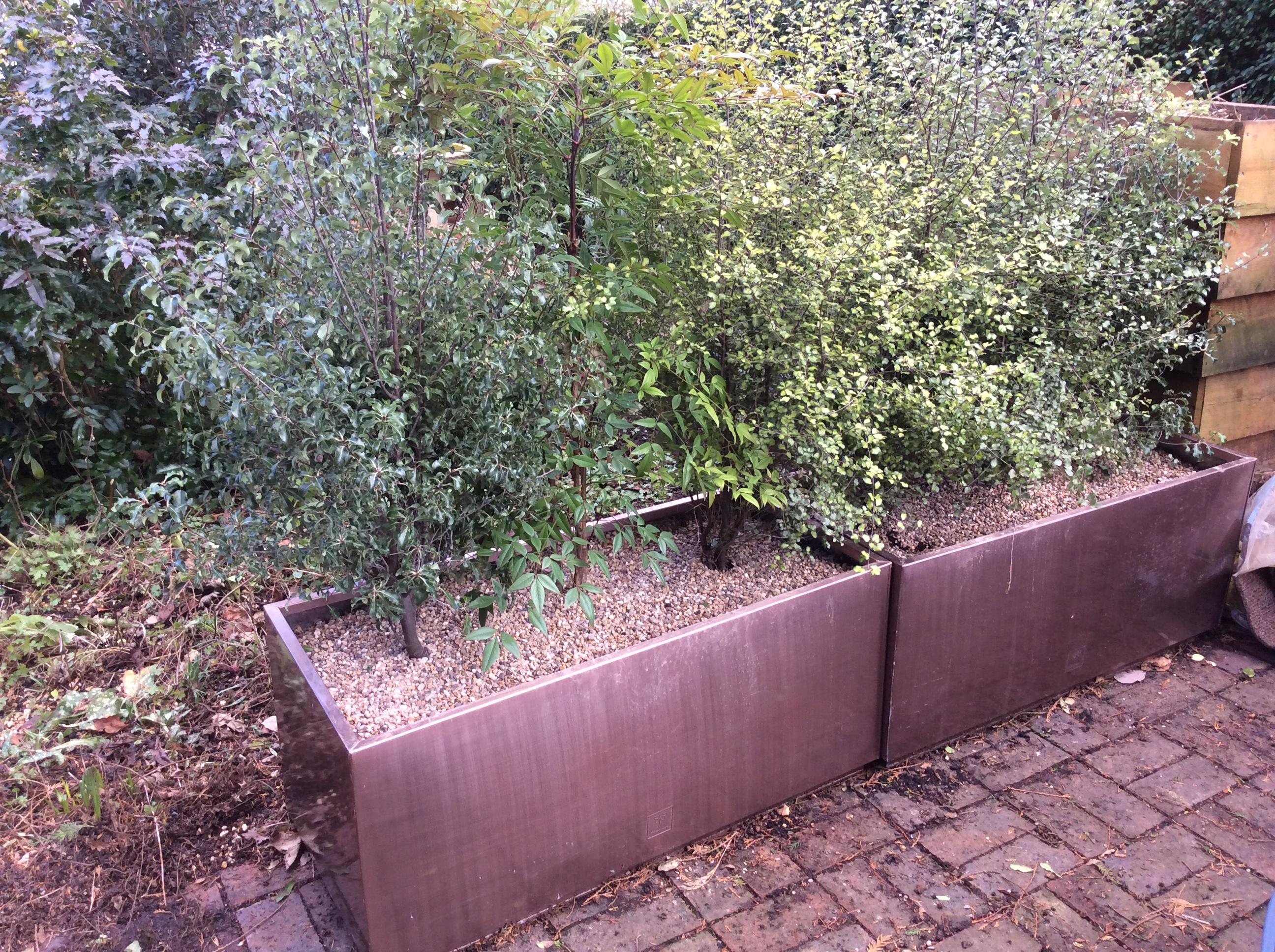 nandina and pittosporum shrubs in copper troughs