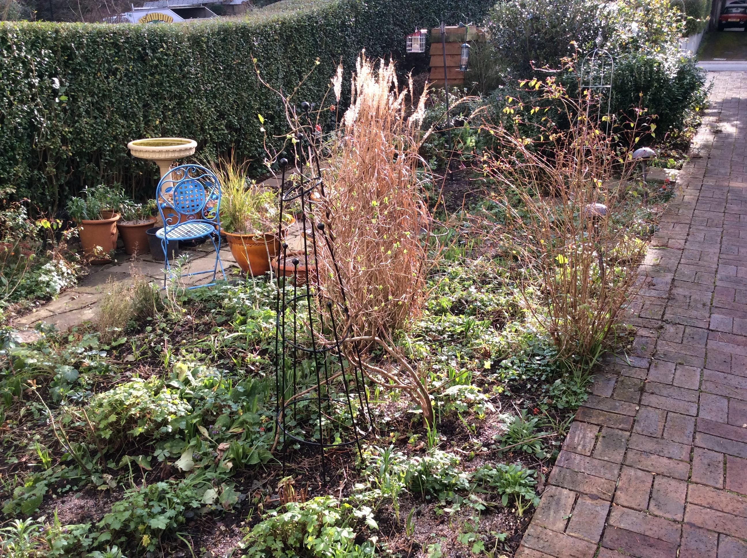 cottage garden perennial planting