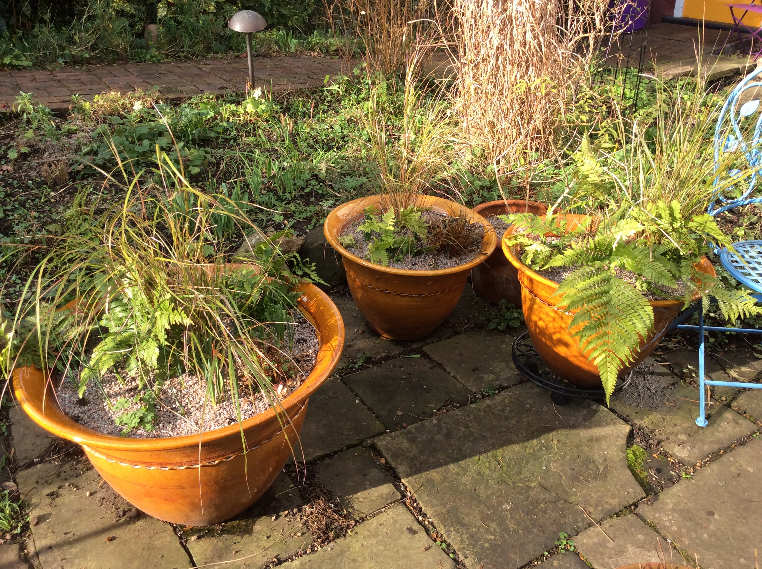 garden container planting of grasses and ferns