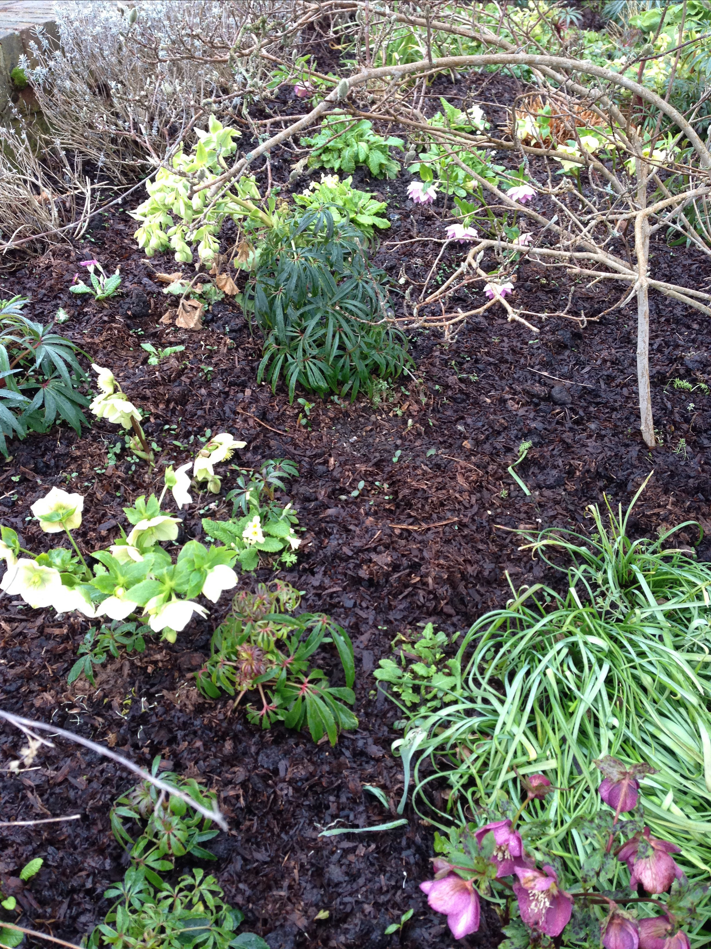 fine horse manure as mulch on borders