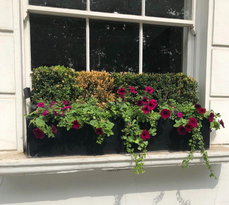 Chelsea windowbox