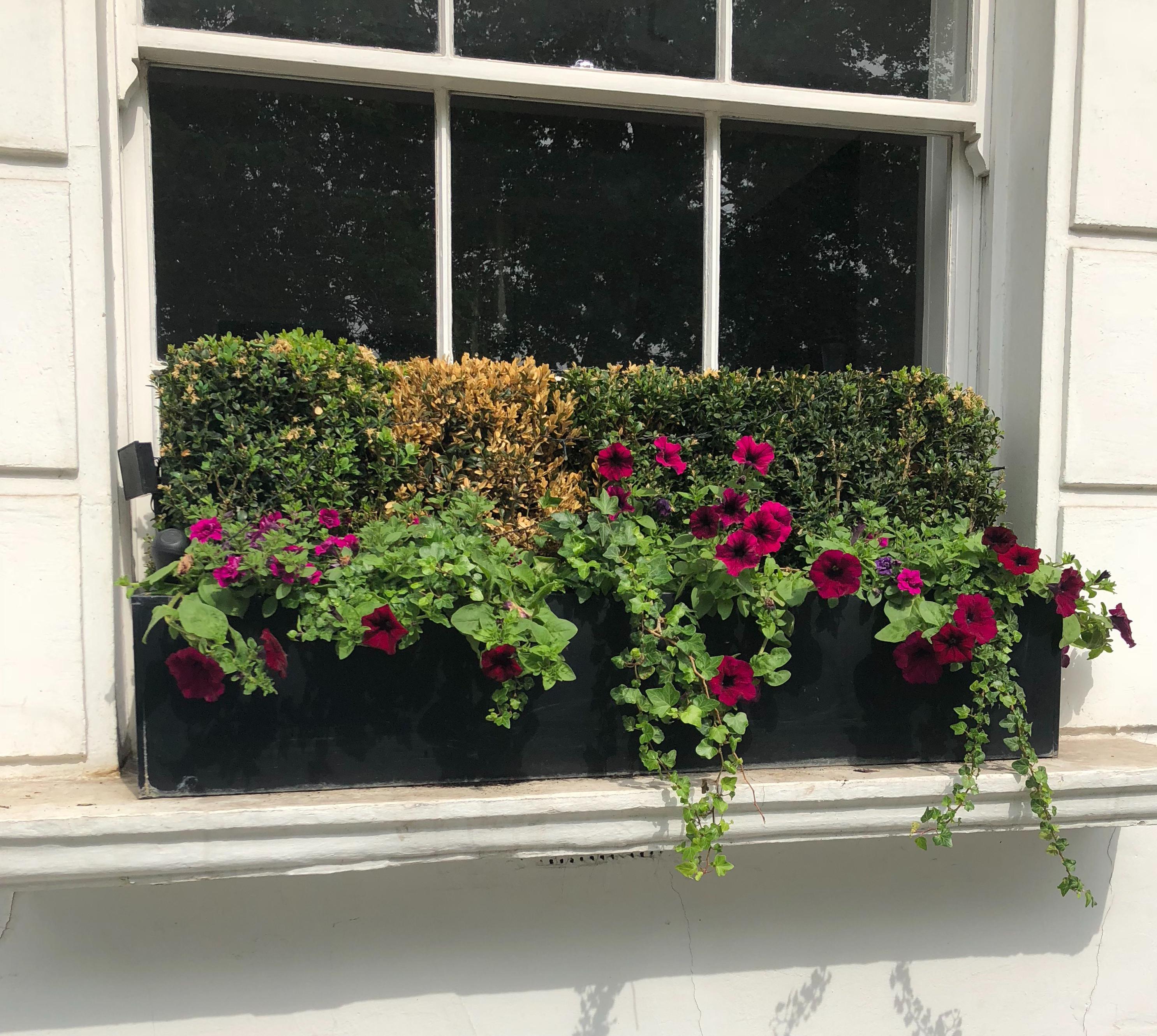 Chelsea windowboz