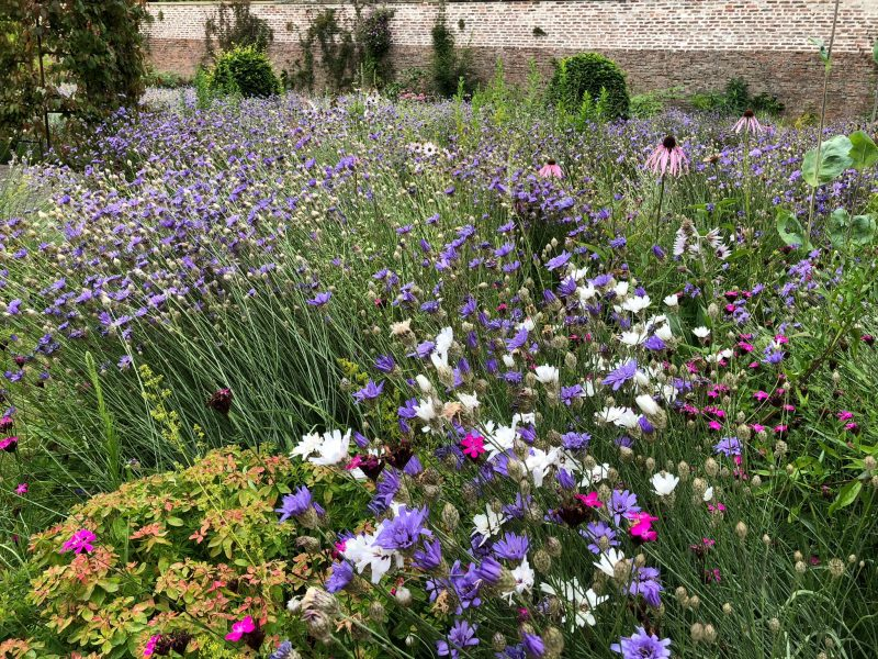 July flower border
