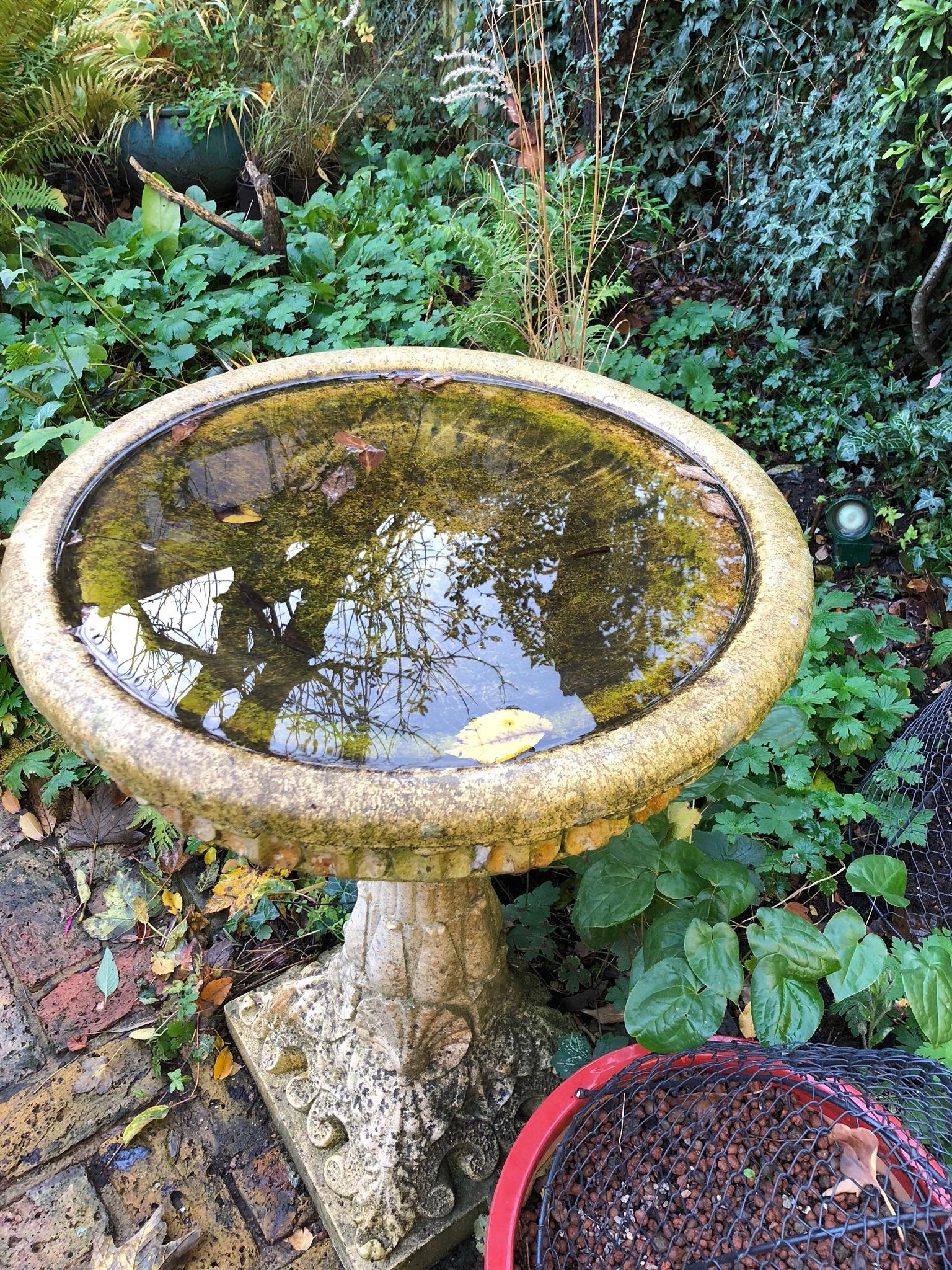 water in garden birdbath