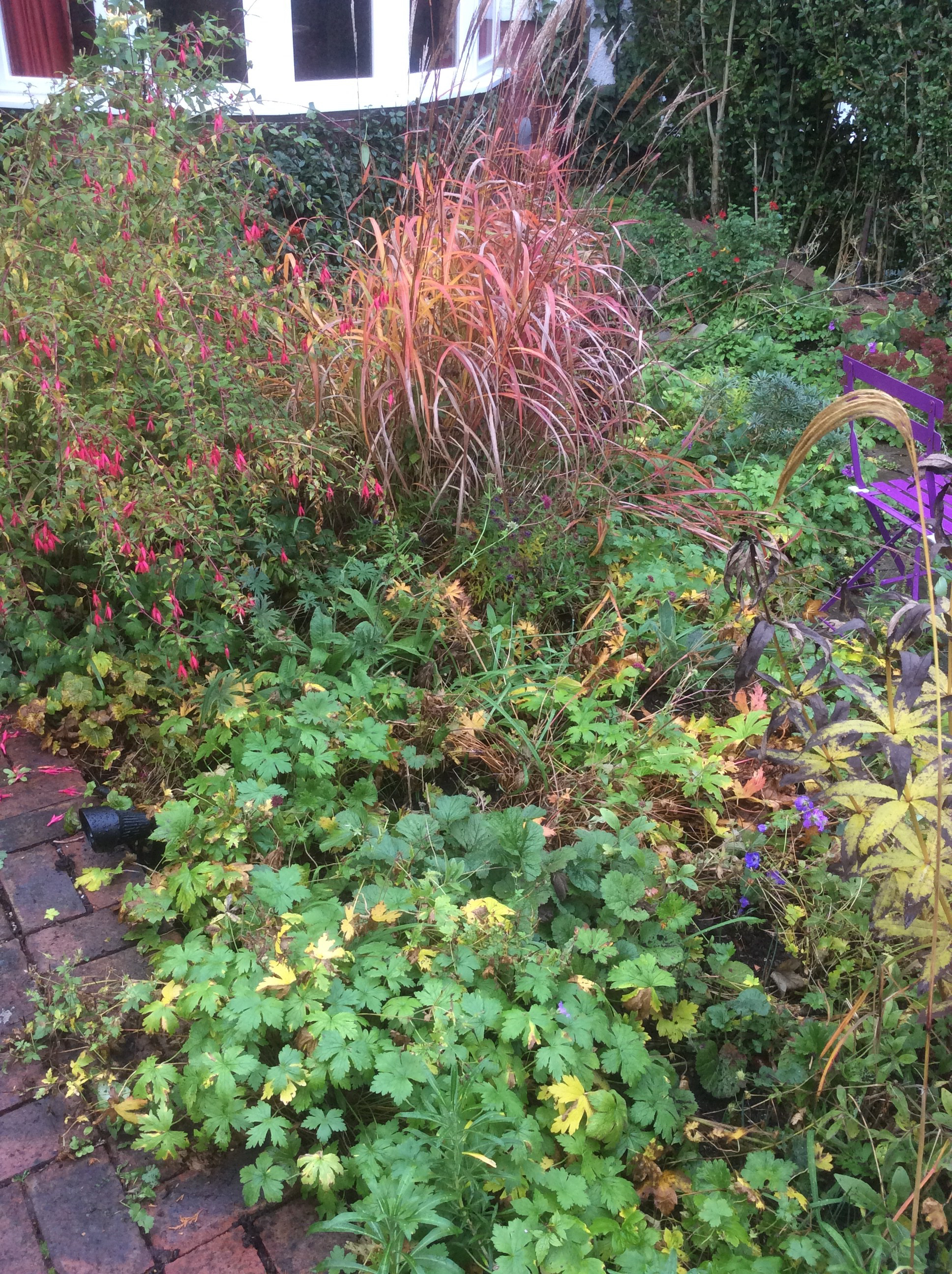 grasses in a cottage garden