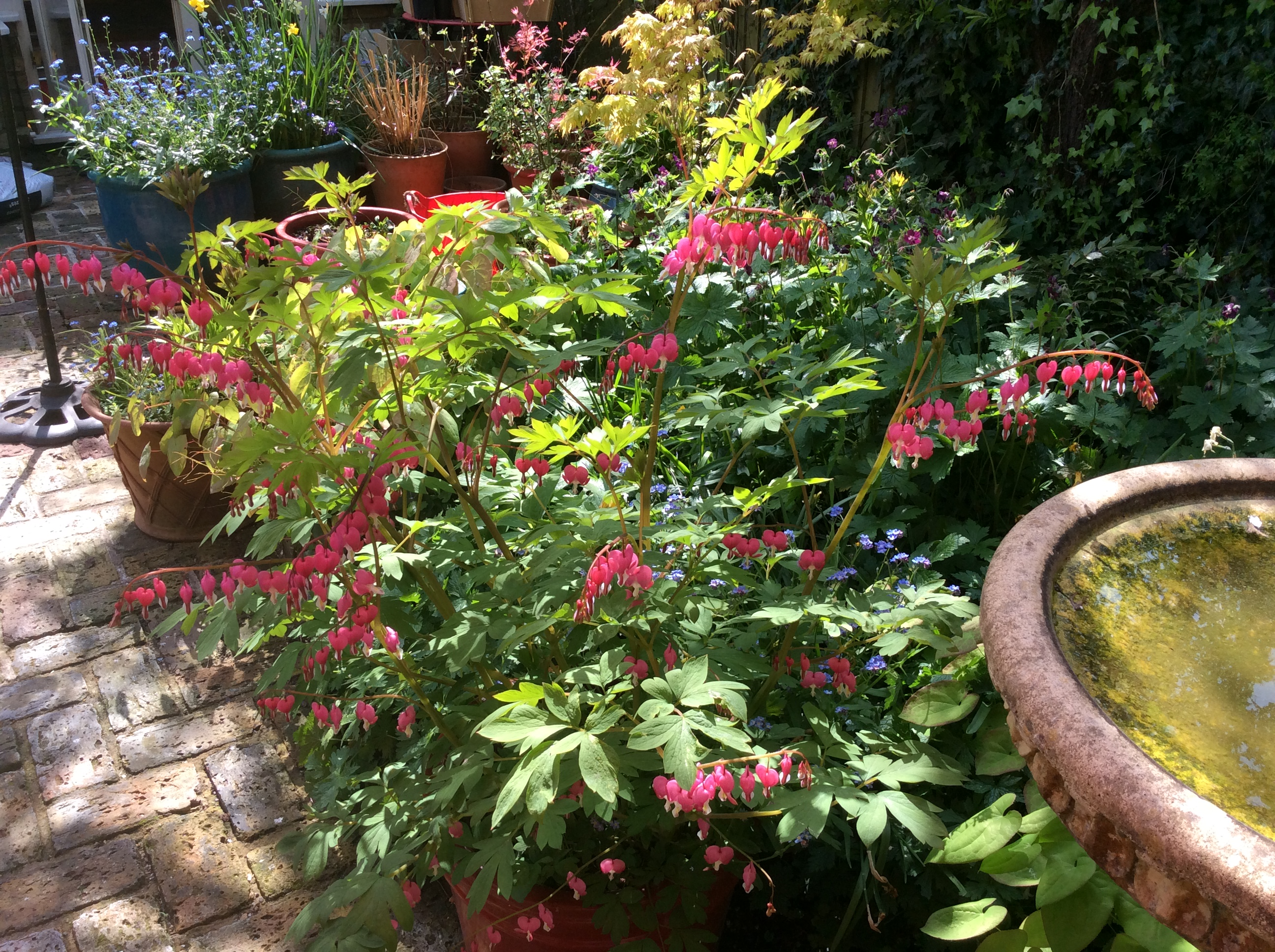 container gardening in a London cottage garden