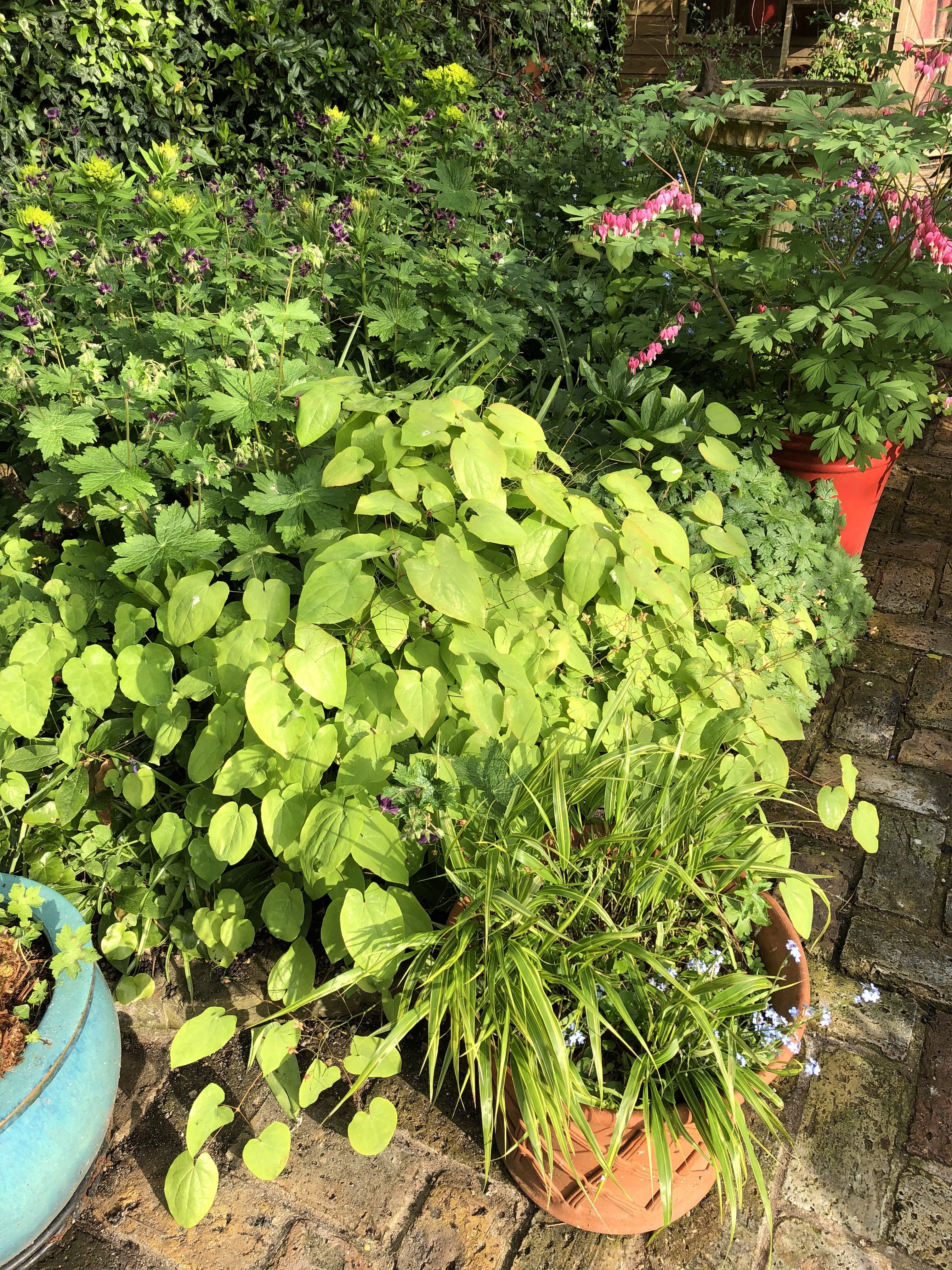 useful garden plants for a London cottage garden