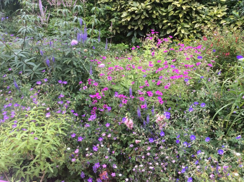 cutting back in a cottage garden