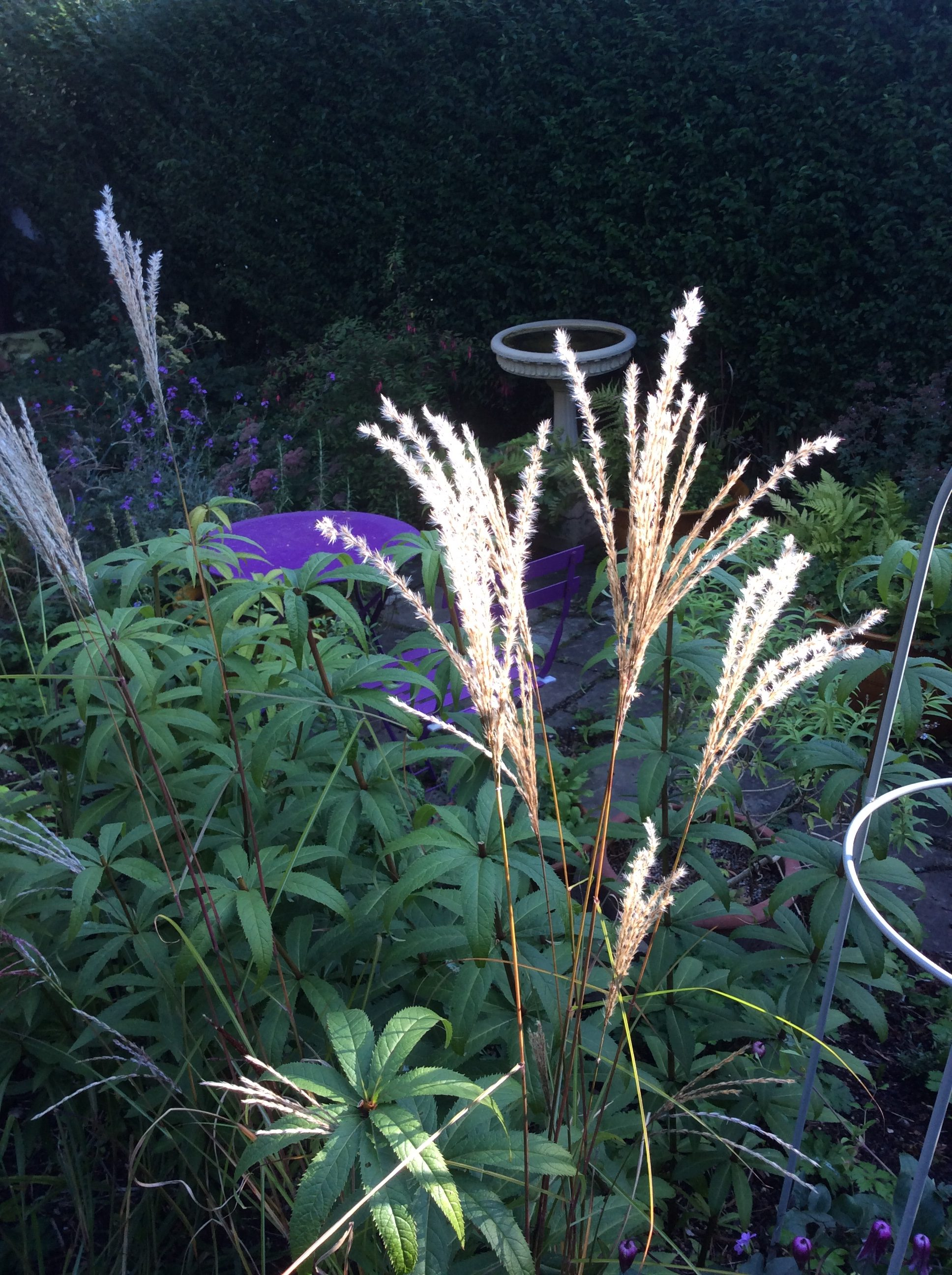 September cottage garden plants