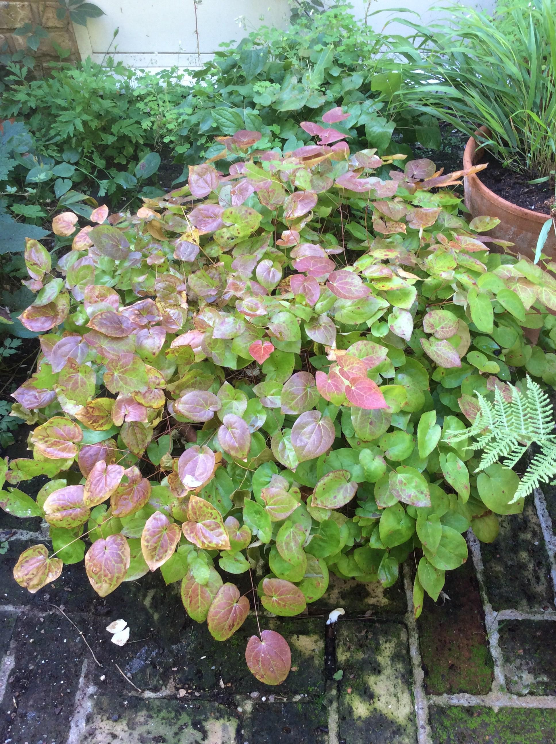 september cottage garden plants