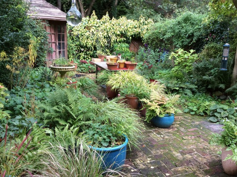 Town back garden