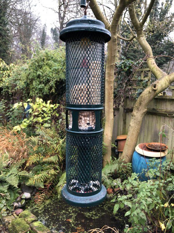Feeding your garden birds