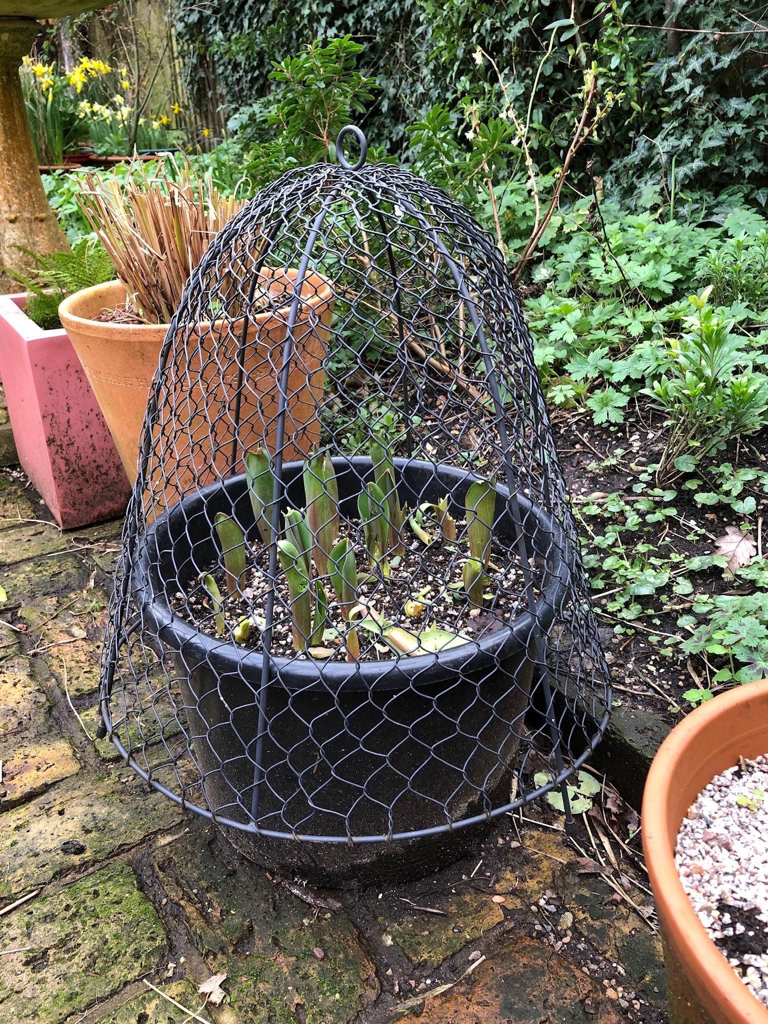 Pots in cottage garden
