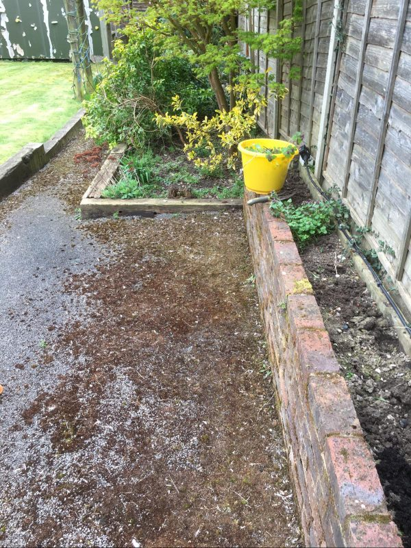 gardening advice for a neglected border