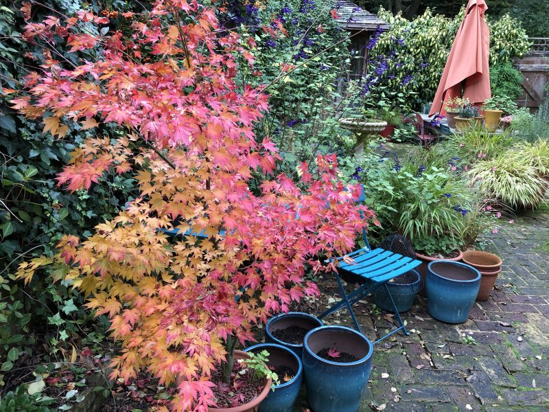 colour in the winter cottage garden