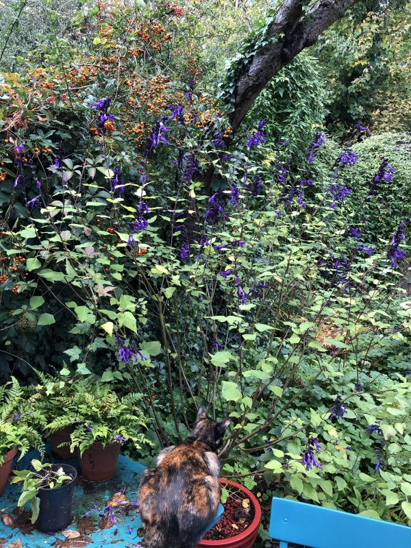 colourful planting in autumn