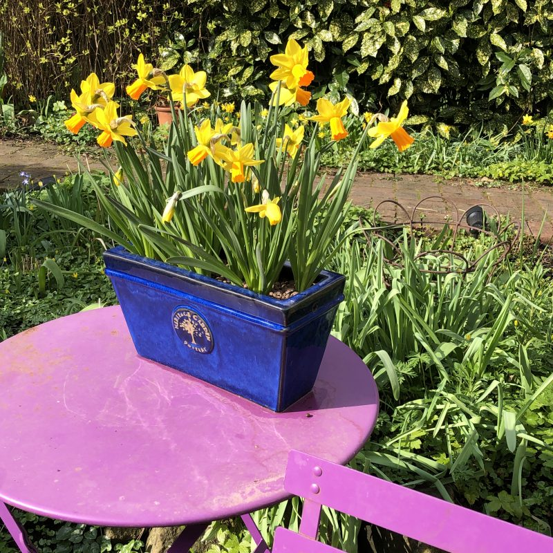 Introduce a new colour into your garden
