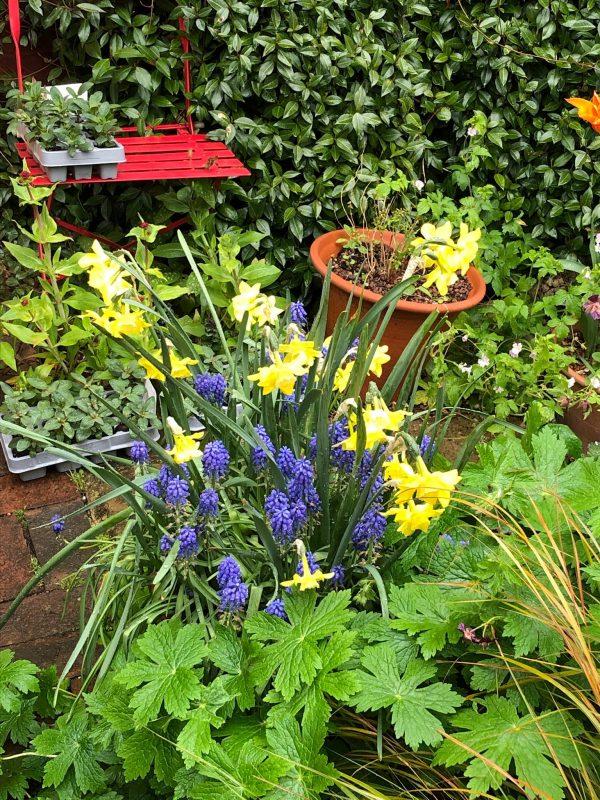 weatherproof cottage garden flowers