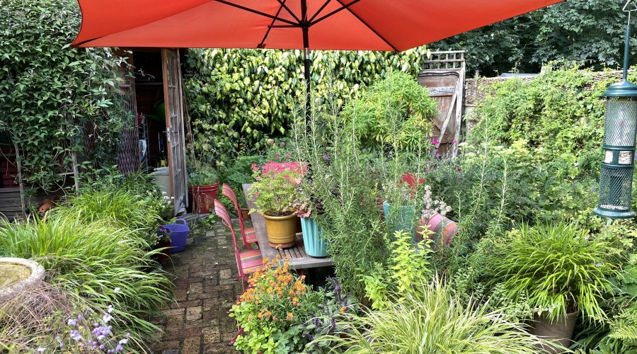 Grasses – they look great in a small town garden